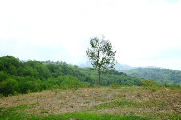 ブナのマザーツリーがシンボルです