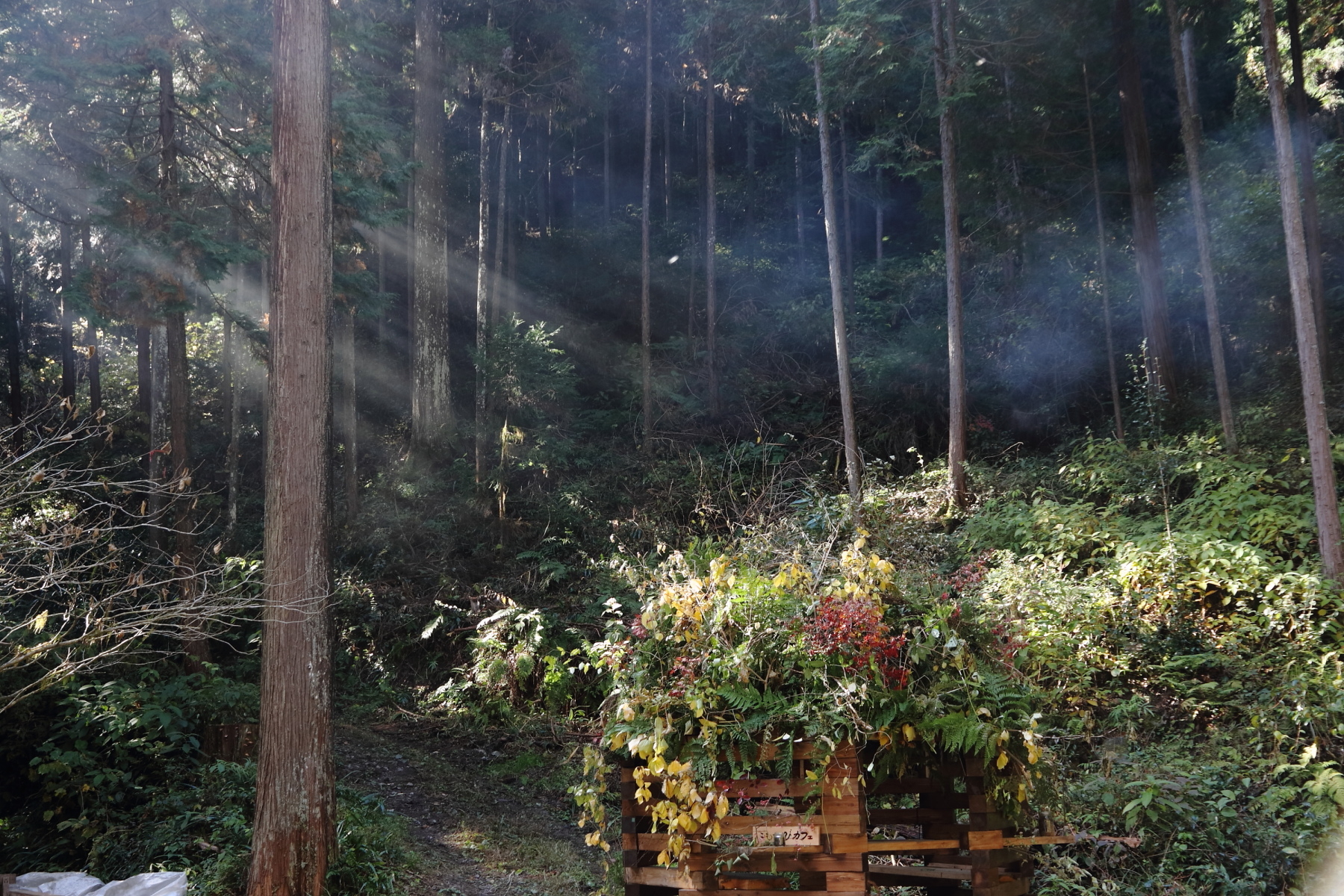 森が福祉にできることvol.3
